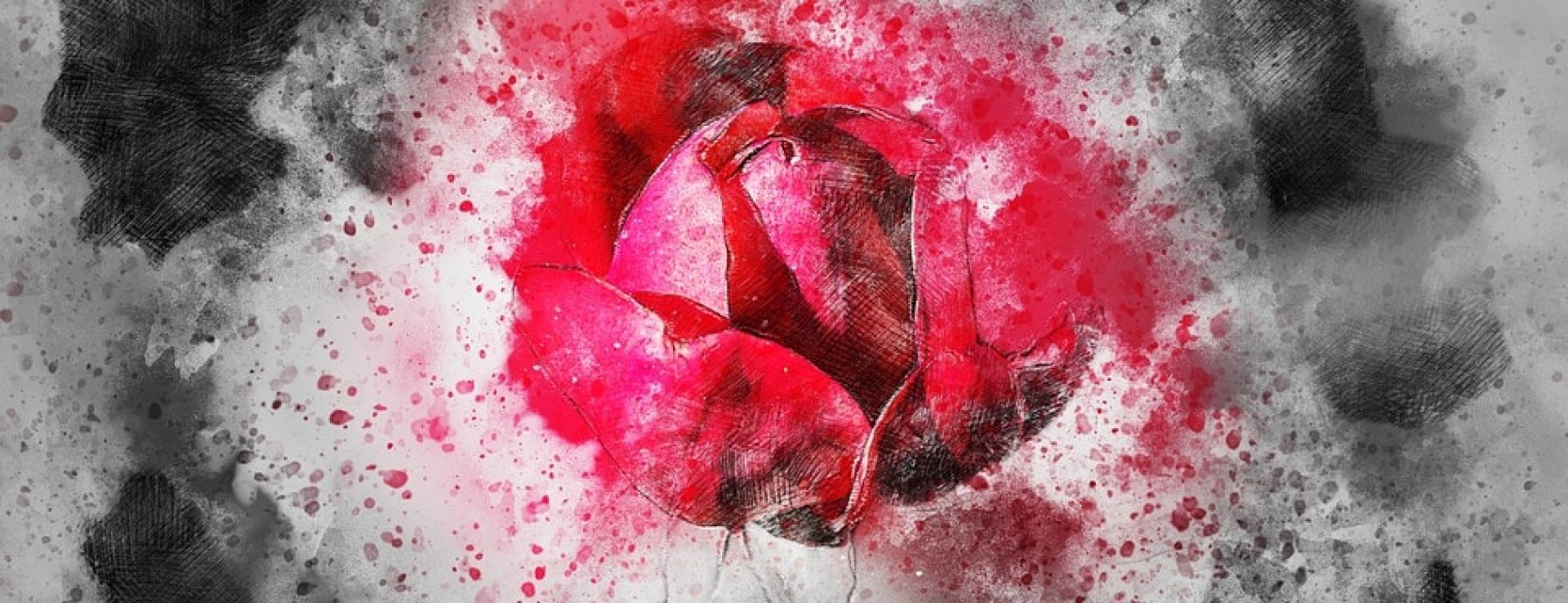 A red rose is breaking through a solid white/grey background